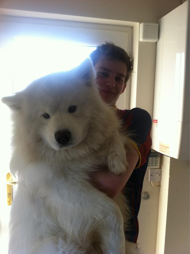 perros grandes 23