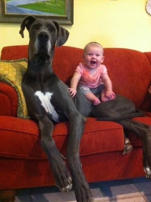 perros grandes 24