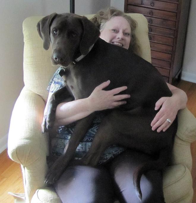 perros grandes 4