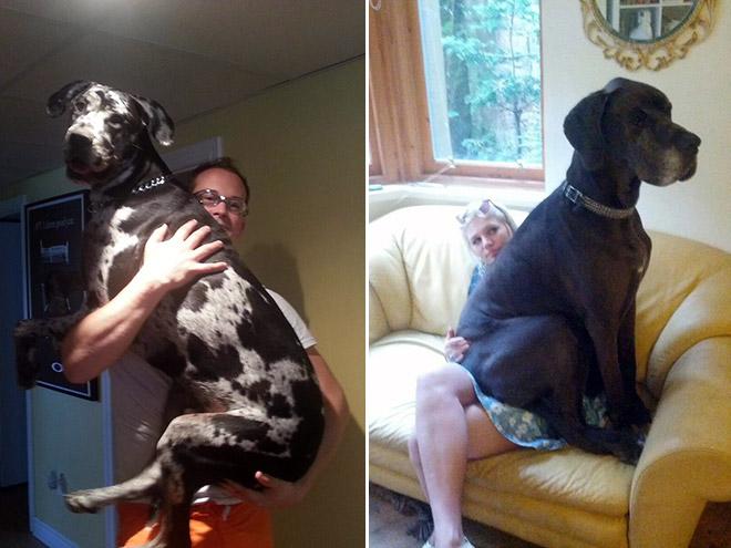 perros grandes 5