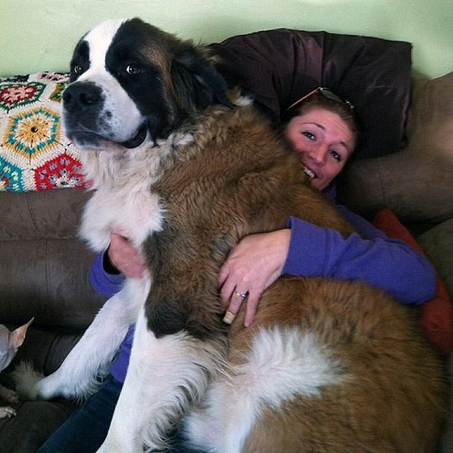perros grandes 7
