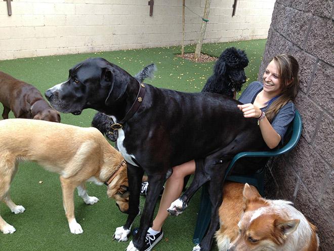 perros grandes 8