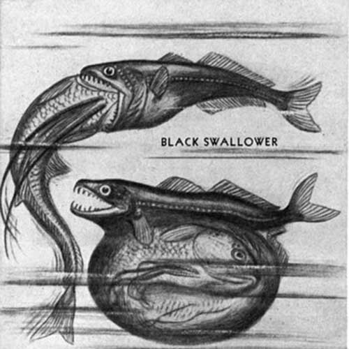 pez engullidor 2