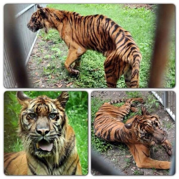 zoo_de_la_muerte_2