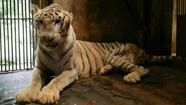 zoo_de_la_muerte_4