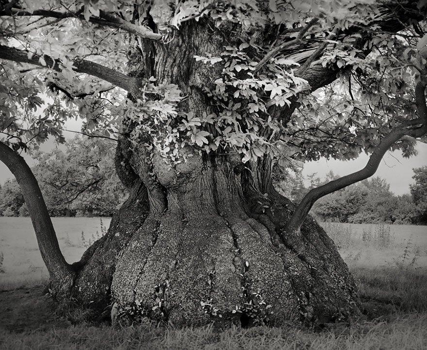 arboles-antiguos-beth-moon14