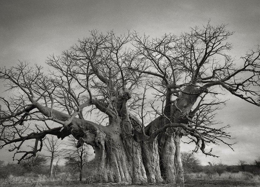 arboles-antiguos-beth-moon15