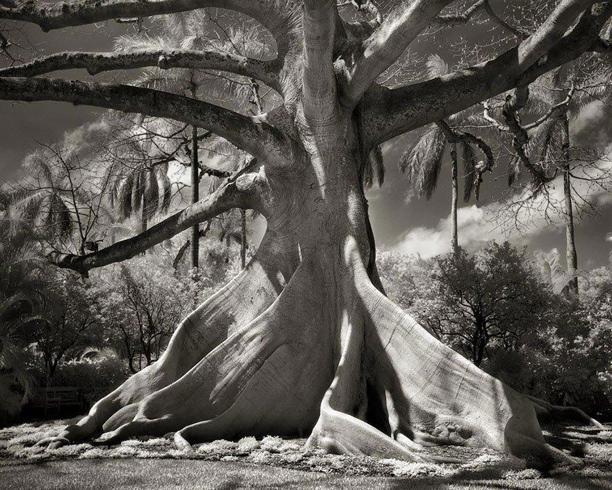 arboles-antiguos-beth-moon18