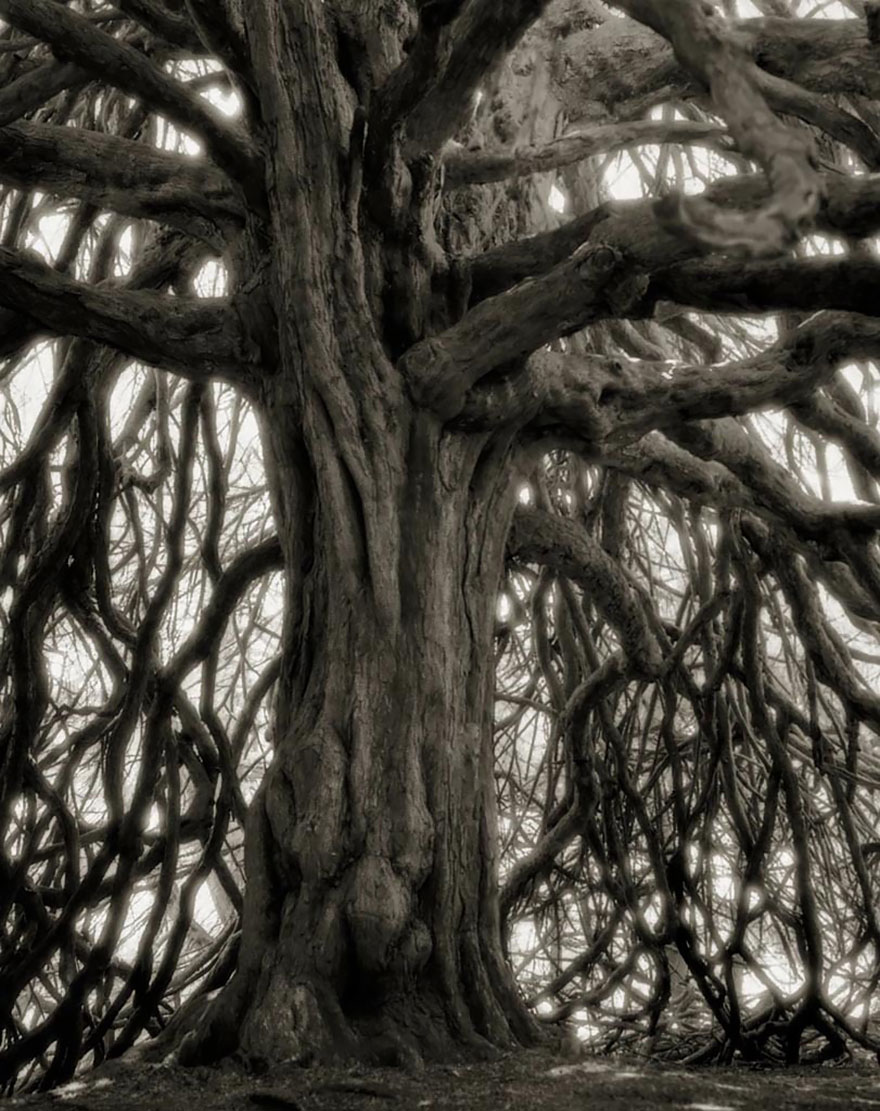 Los árboles más antiguos y extraños