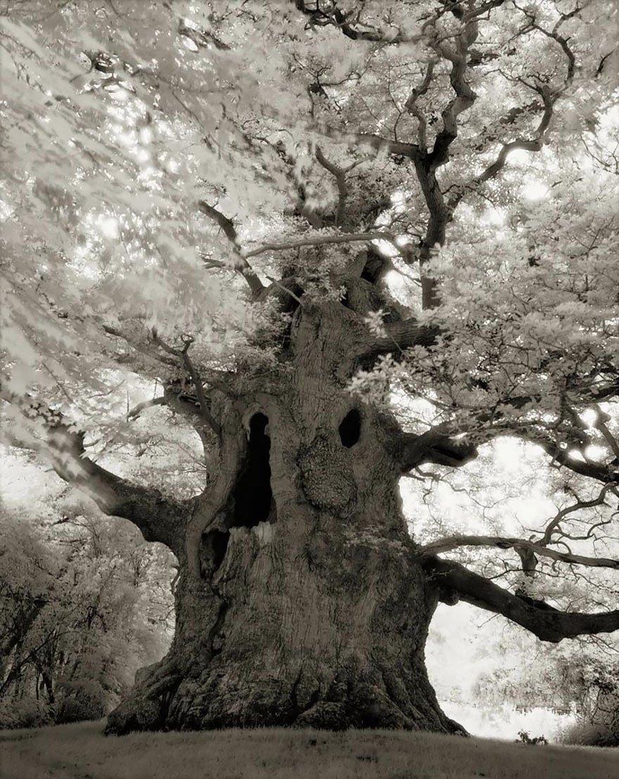 arboles-antiguos-beth-moon5