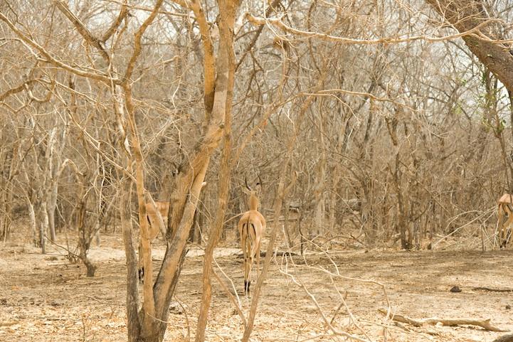 camuflaje animales 12