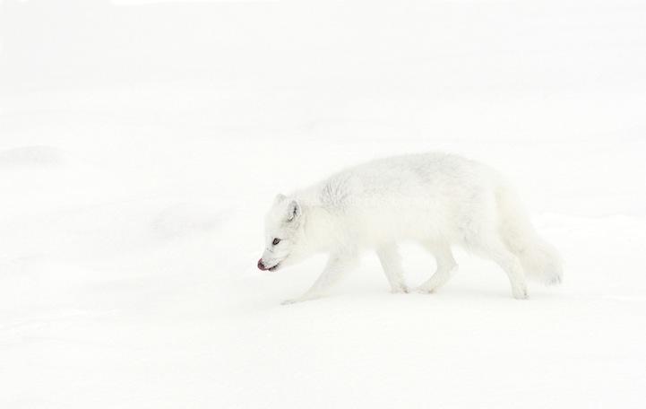 [Imagen: camuflaje-animales-14.jpg]