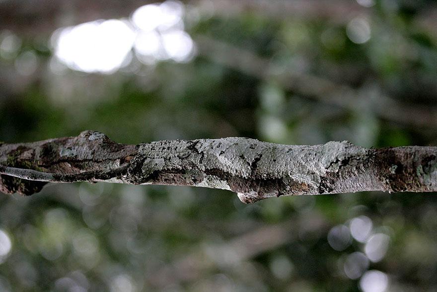 [Imagen: camuflaje-animales-17.jpg]
