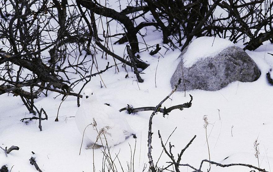camuflaje animales 19