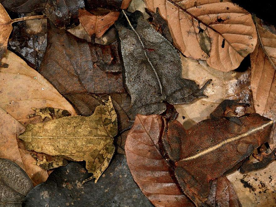 [Imagen: camuflaje-animales-20.jpg]