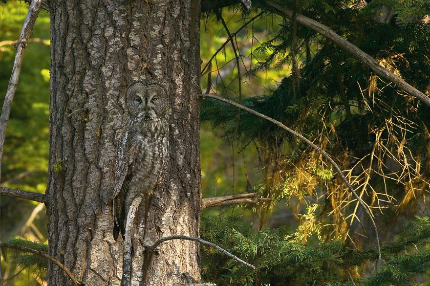 [Imagen: camuflaje-animales-27.jpg]