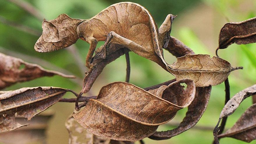 [Imagen: camuflaje-animales-29.jpg]
