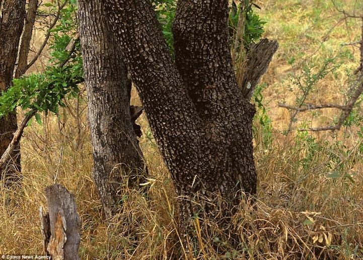 camuflaje animales 7