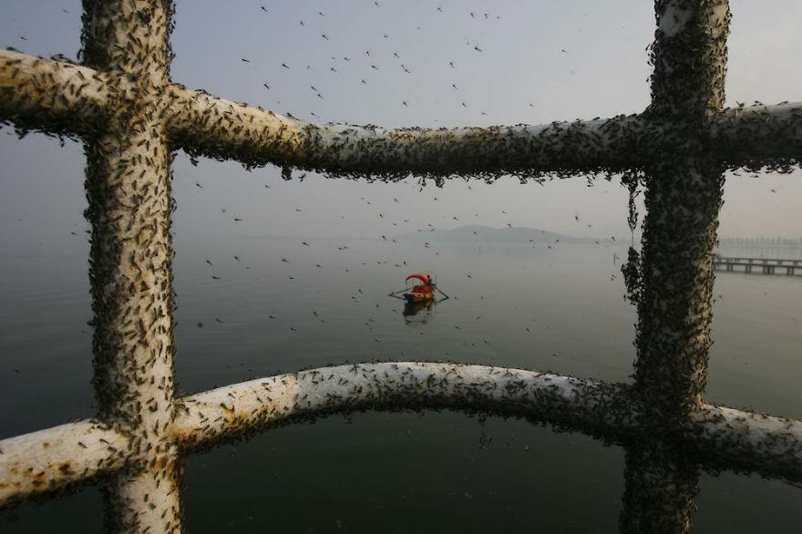 contaminacion en China 24