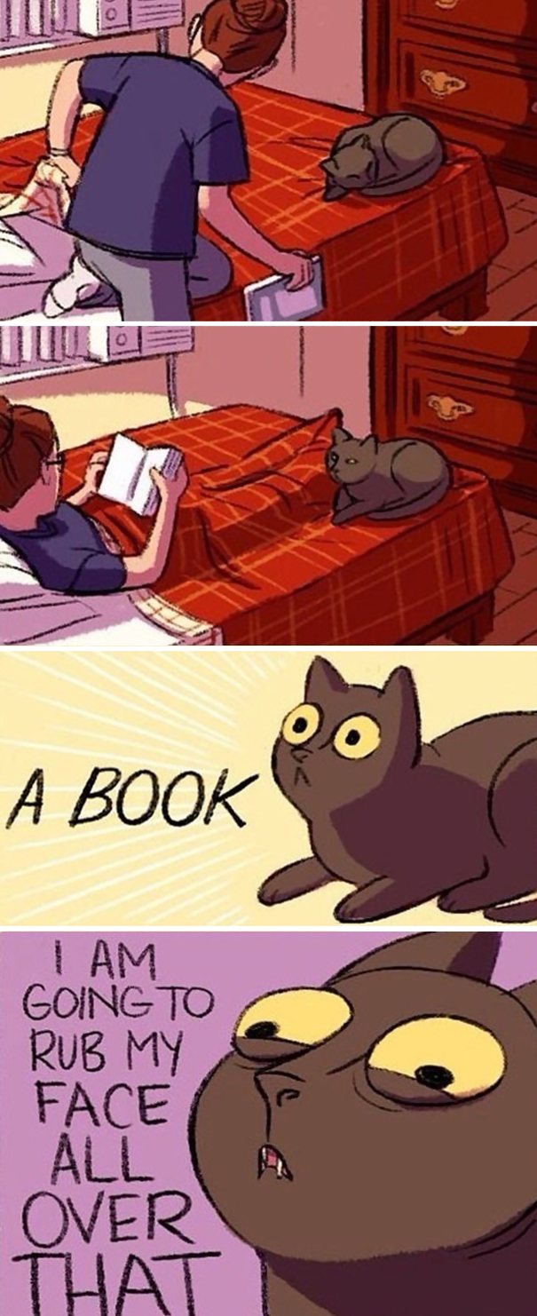 divertida logica felina 10