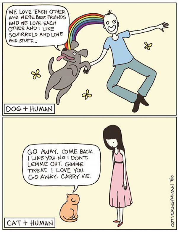 divertida logica felina 13