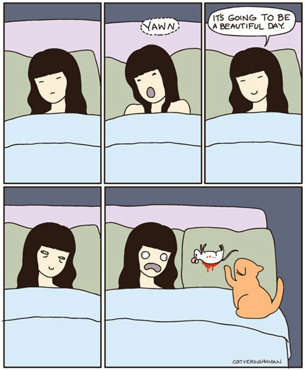 divertida logica felina 15