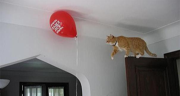 divertida logica felina 20