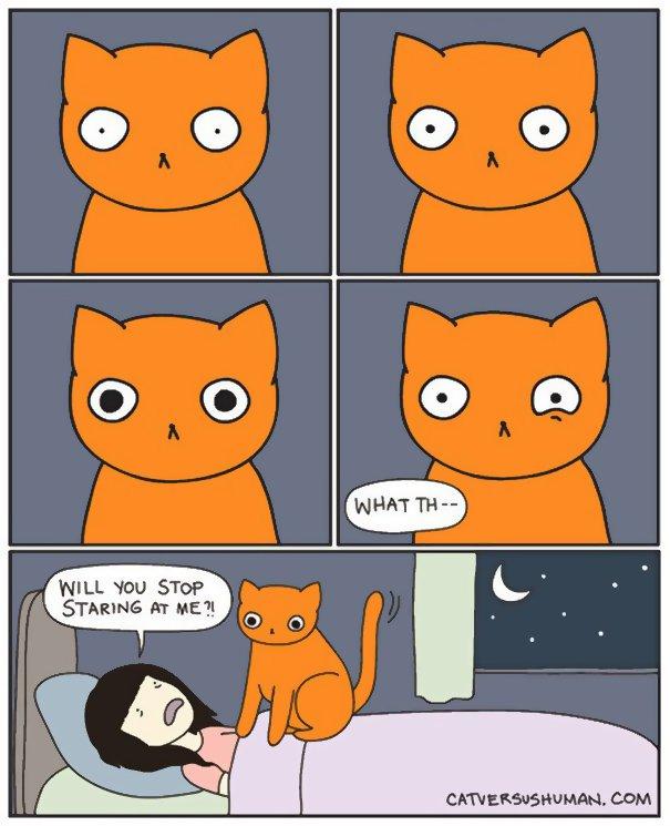 divertida logica felina 25
