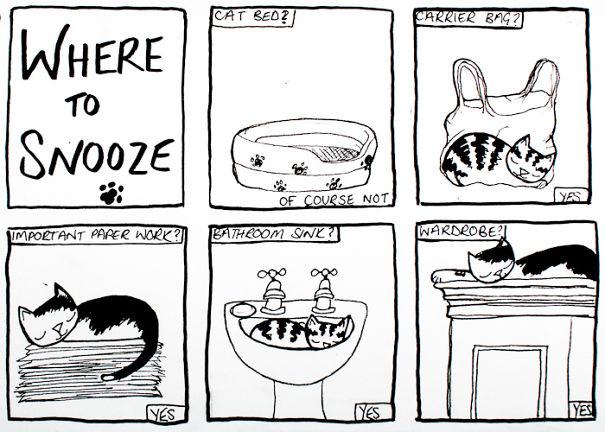 divertida logica felina 26