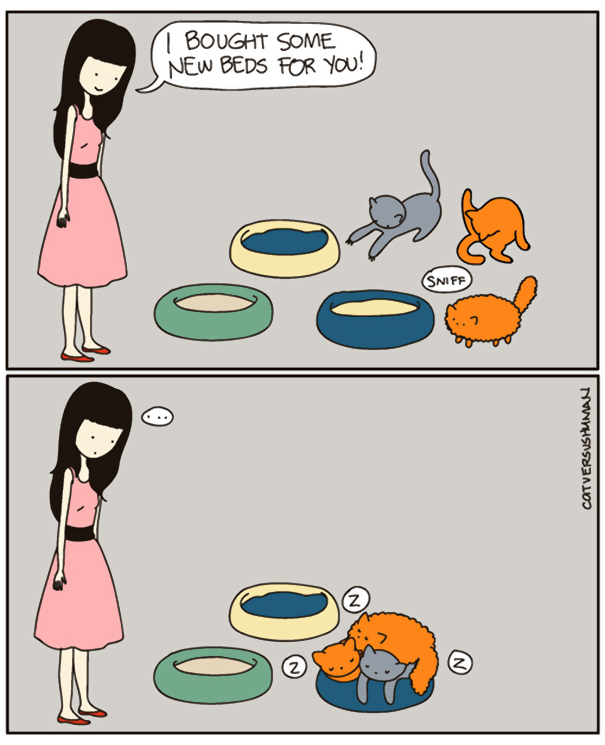 divertida logica felina 27