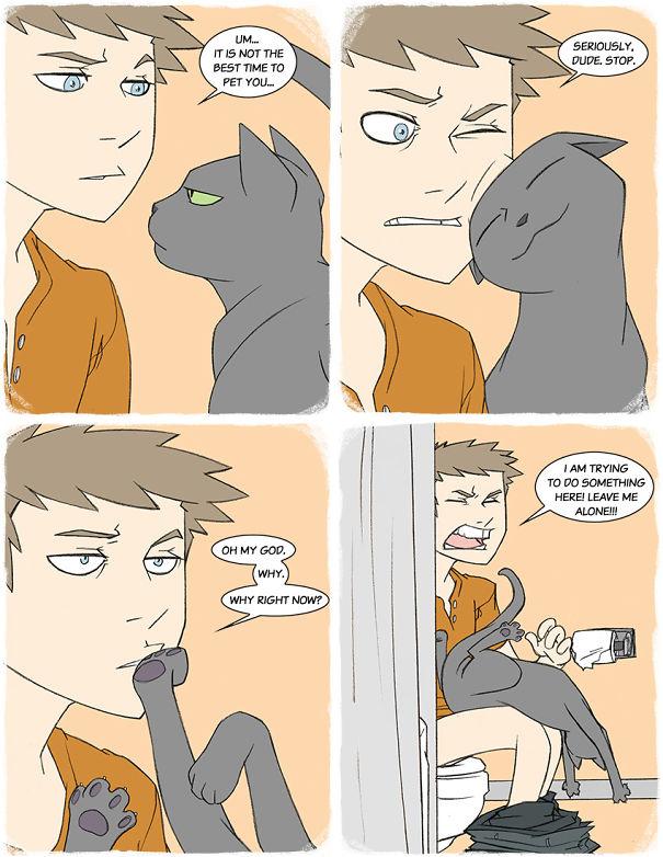 divertida logica felina 5