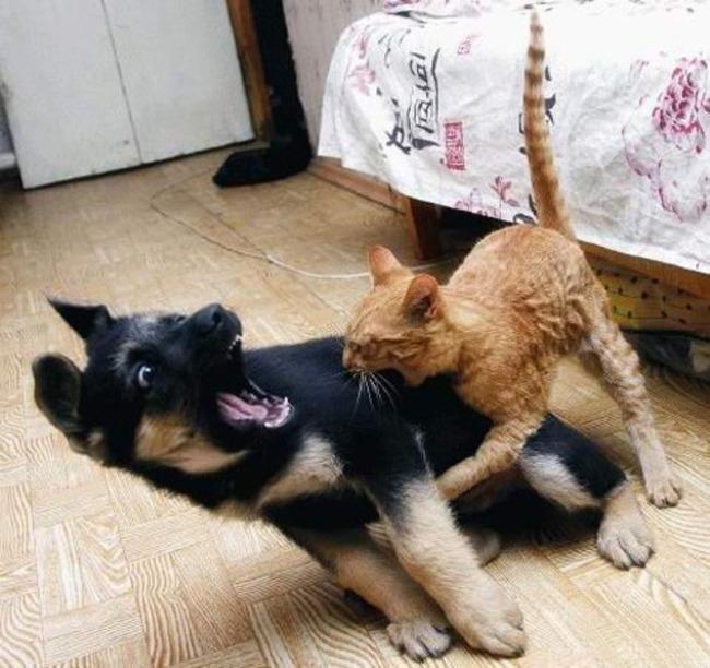 duro es ser cachorro 11