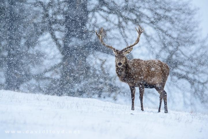 fotografia invierno 14