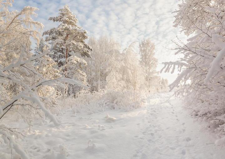 зимний заснеженный лес. Зимний пейзаж