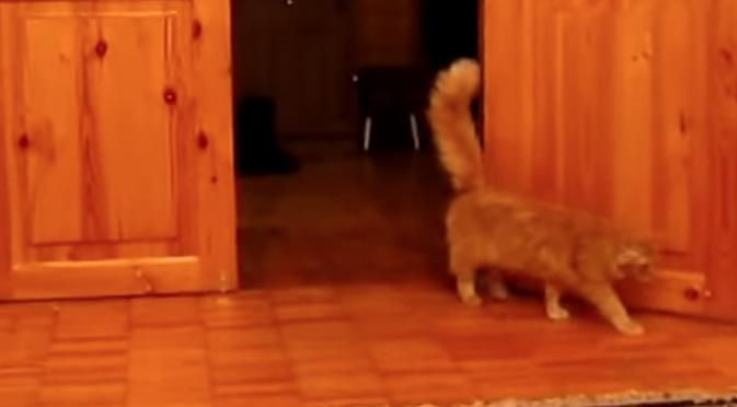 gato-super-mario