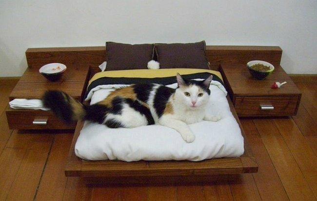 gatos afortunados 2