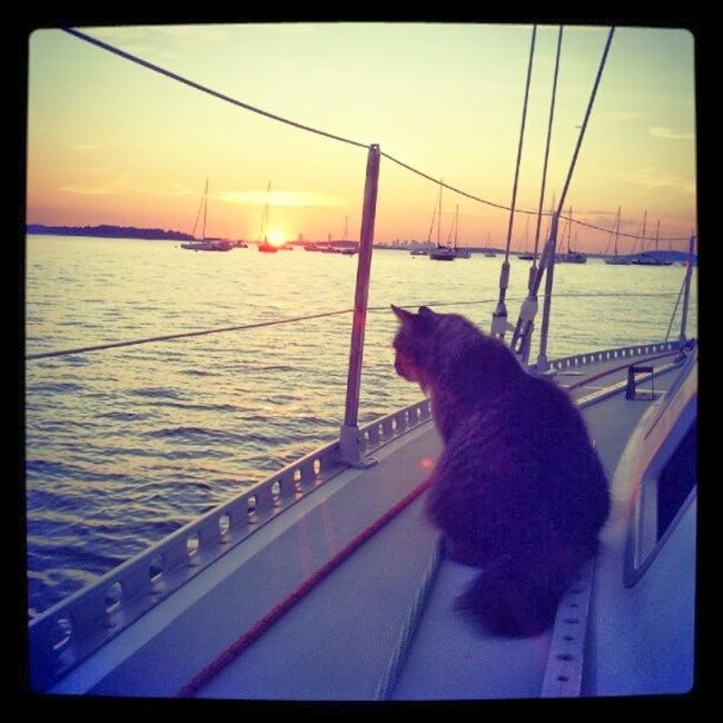 gatos afortunados 9