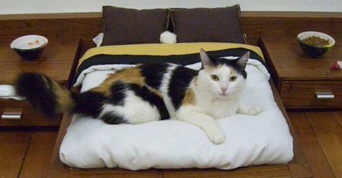gatos-mimados
