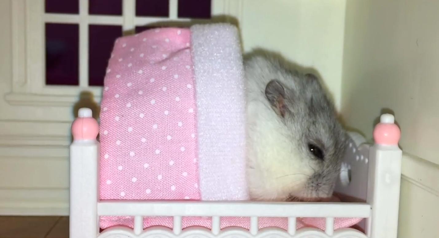 hamster-cama