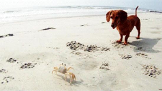 momentos-perros-salchicha