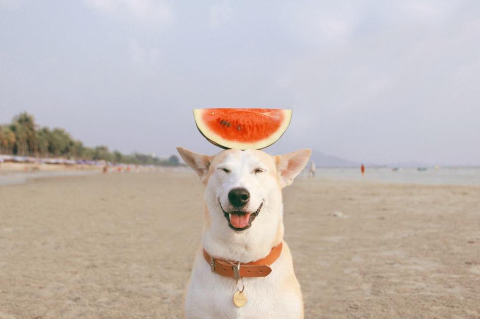 perro_feliz_1