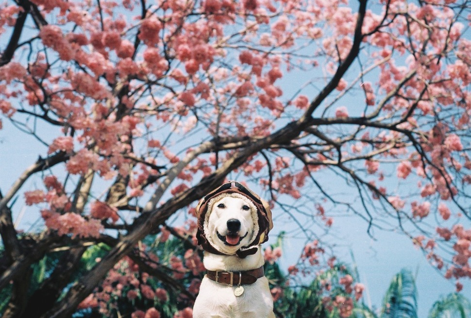 perro_feliz_10