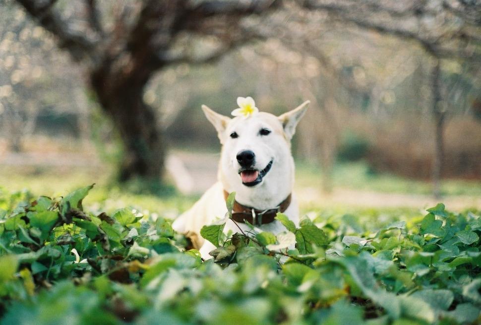 perro_feliz_11