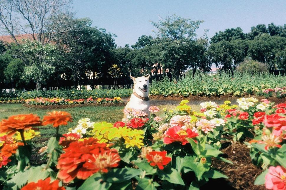 perro_feliz_12