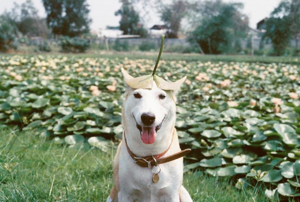 perro_feliz_13