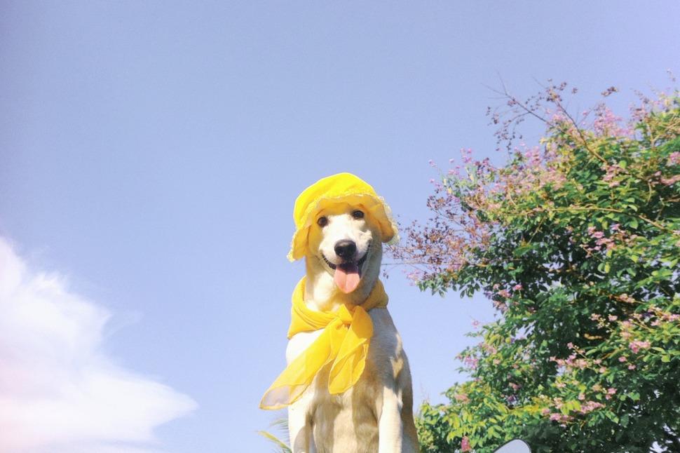perro_feliz_14