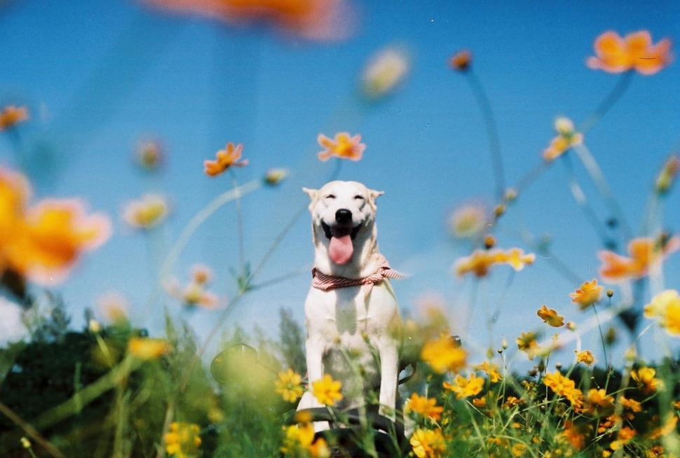 perro_feliz_15