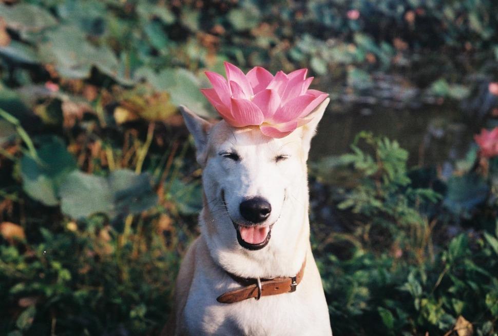 perro_feliz_2