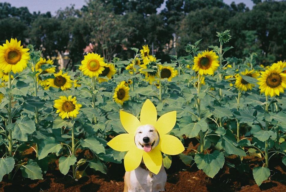 perro_feliz_3