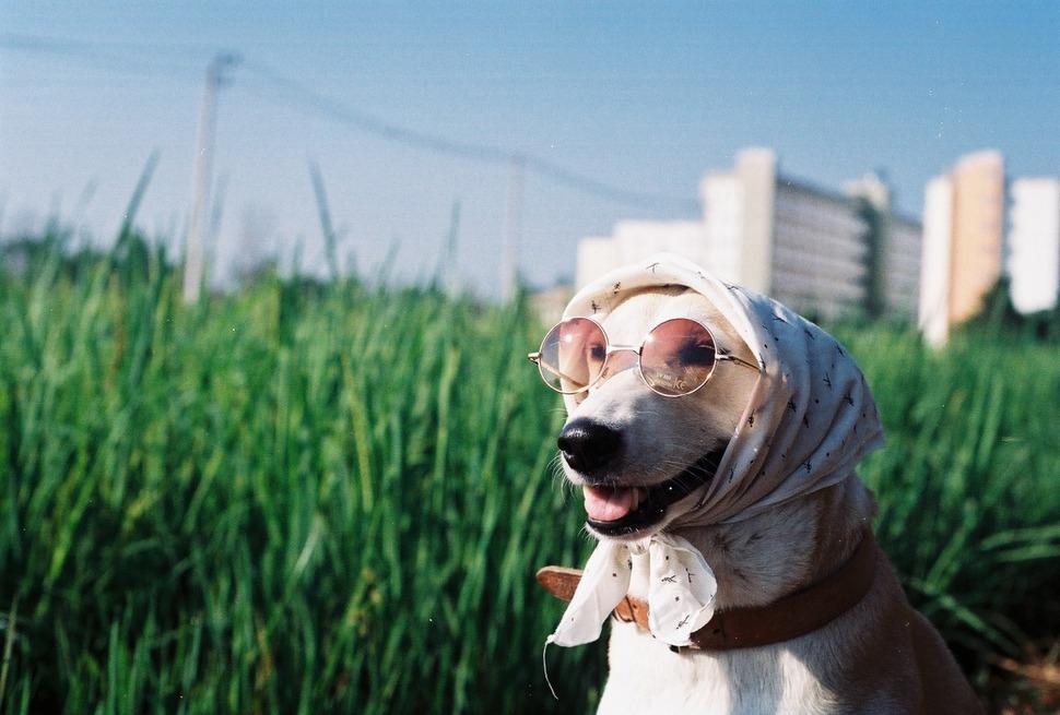 perro_feliz_5